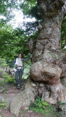 11-黄金山神社風水ツアー 大樹と