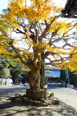 宮城・南三陸町〜金華山復興支援 風水ツアー㉑ 小金山神社