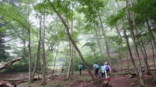 9-黄金山神社風水ツアー 林を抜け