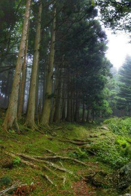 13-黄金山神社風水ツアー 杉並木を抜けると